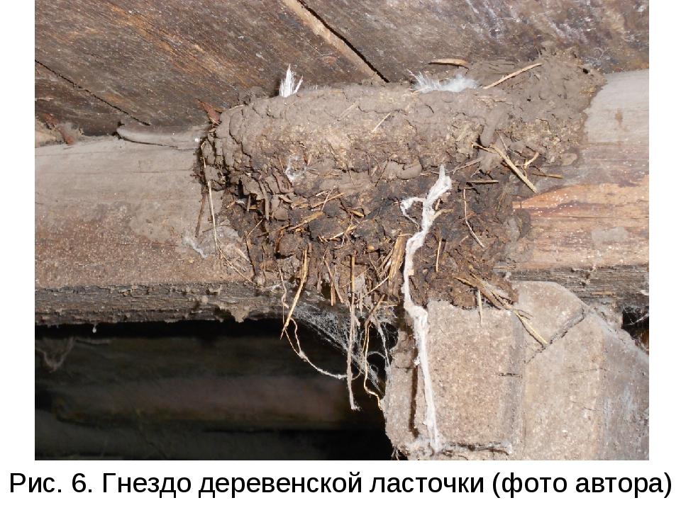Рис. 6. Гнездо деревенской ласточки (фото автора)