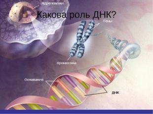 Какова роль ДНК?
