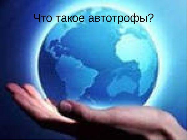 Что такое автотрофы?