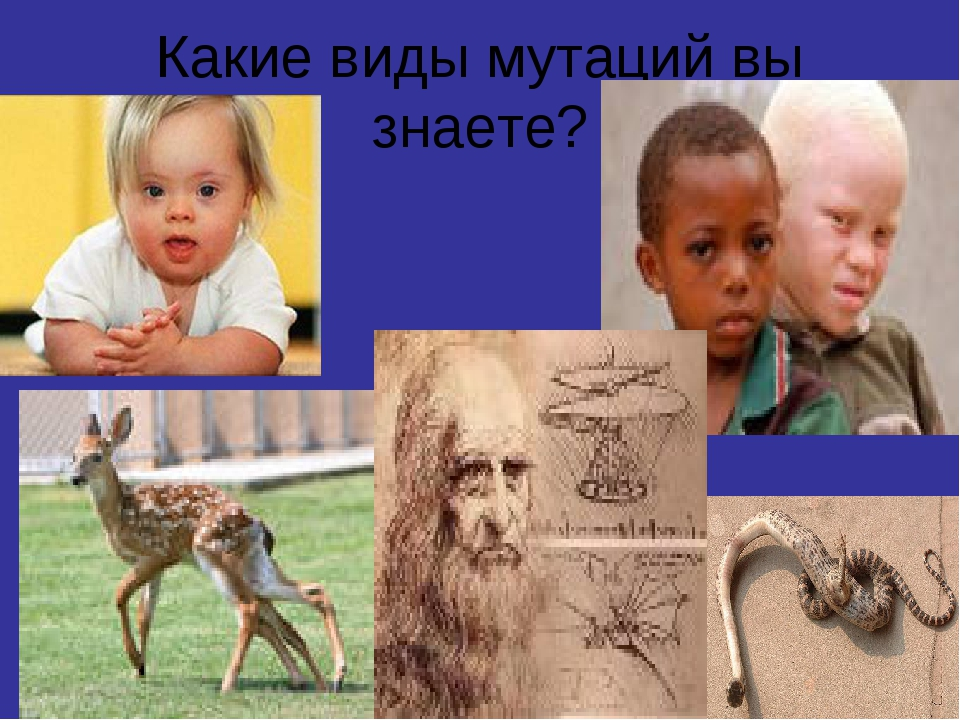 Какие виды мутаций вы знаете?