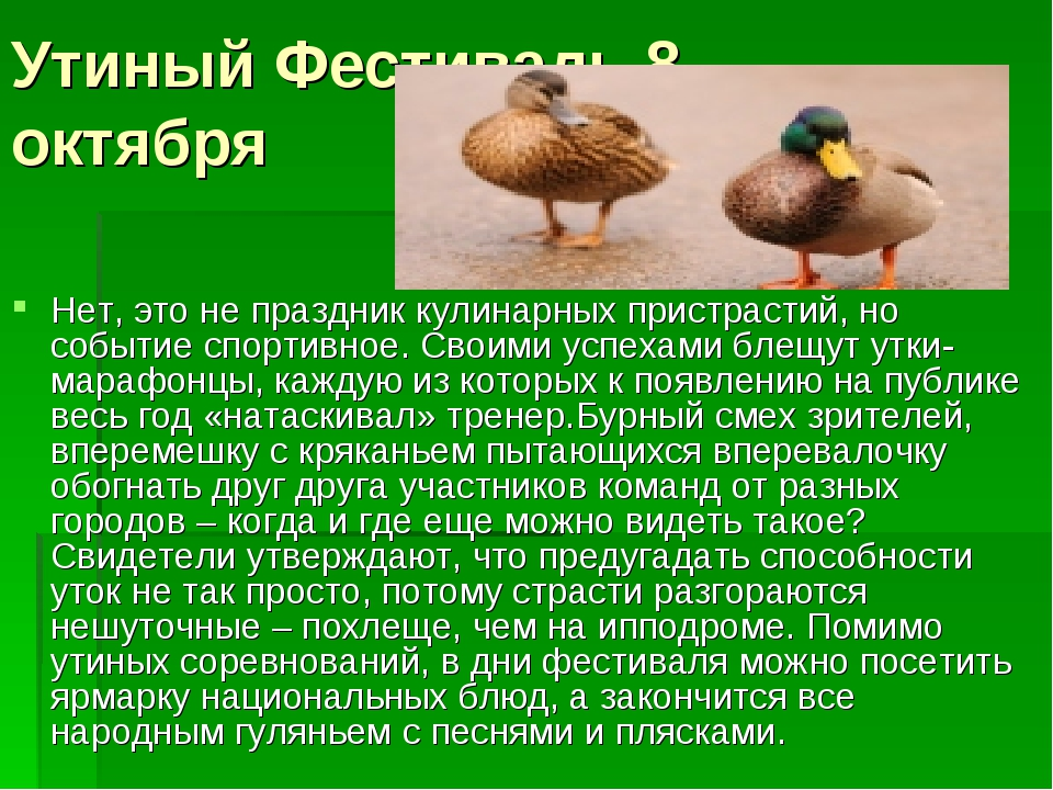 Утиный Фестиваль 8 октября Нет, это не праздник кулинарных пристрастий, но со...