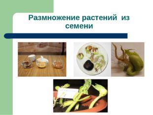 Размножение растений из семени