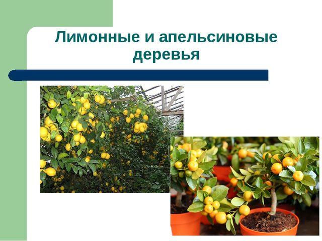 Лимонные и апельсиновые деревья