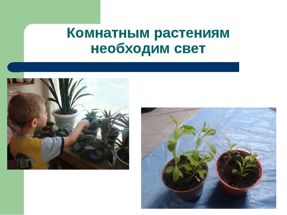 Комнатным растениям необходим свет