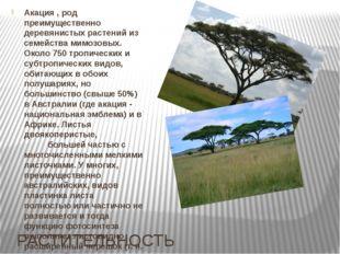 РАСТИТЕЛЬНОСТЬ Акация , род преимущественно деревянистых растений из семейств