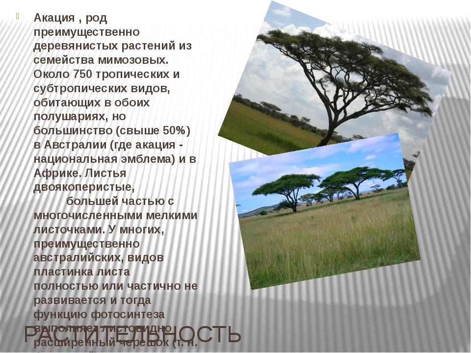 РАСТИТЕЛЬНОСТЬ Акация , род преимущественно деревянистых растений из семейств...