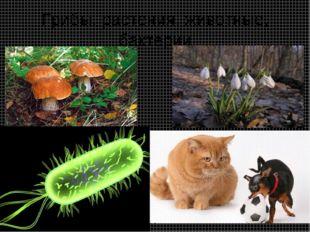 Грибы, растения, животные, бактерии