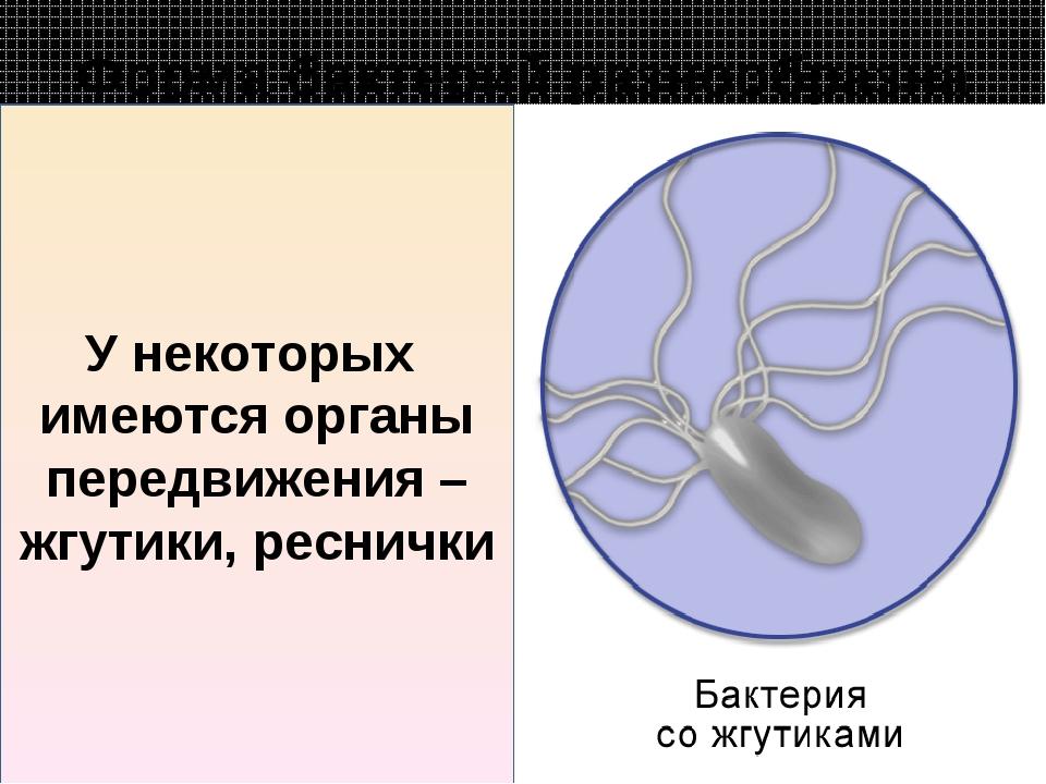 Форма бактерий разнообразна У некоторых имеются органы передвижения – жгутики...