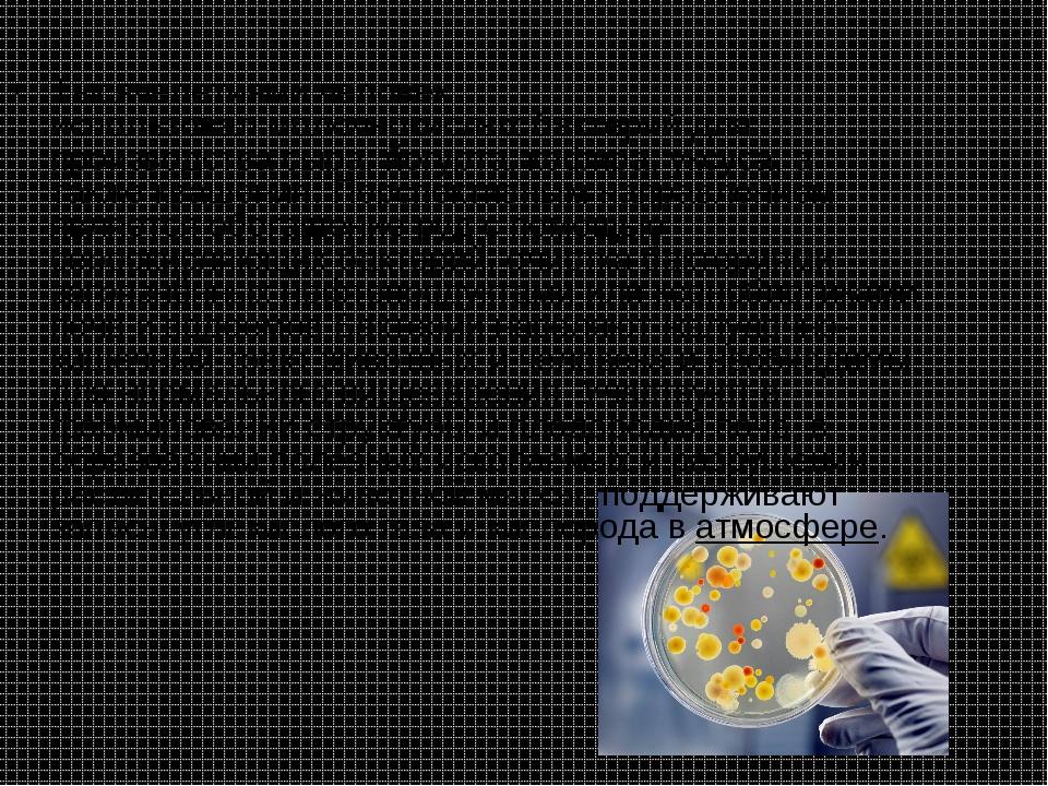Тысячелетиями человек использовалмолочнокислых бактерийдля производствасыр...