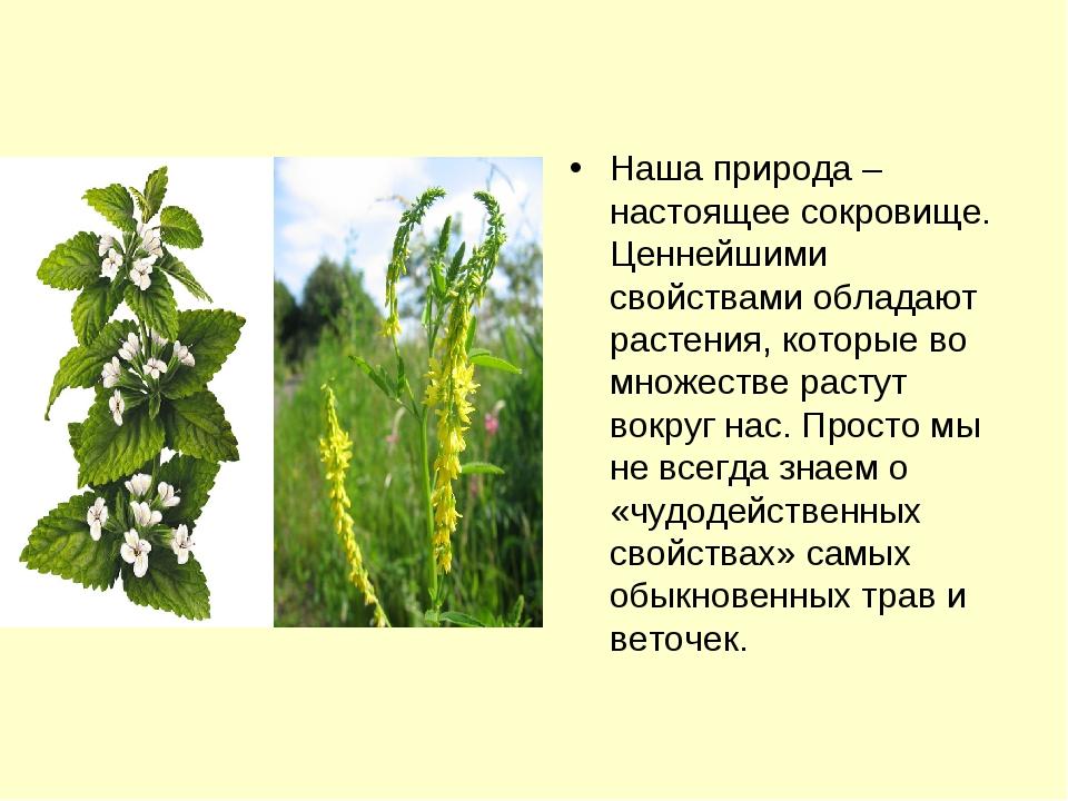 Наша природа – настоящее сокровище. Ценнейшими свойствами обладают растения,...