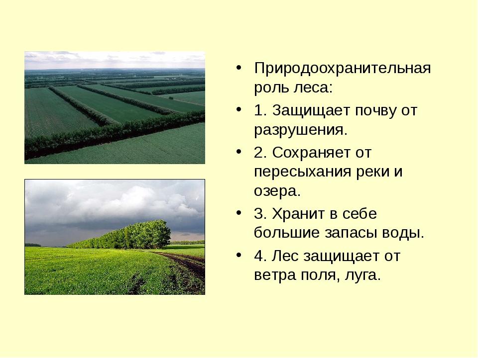 Природоохранительная роль леса: 1. Защищает почву от разрушения. 2. Сохраняет...