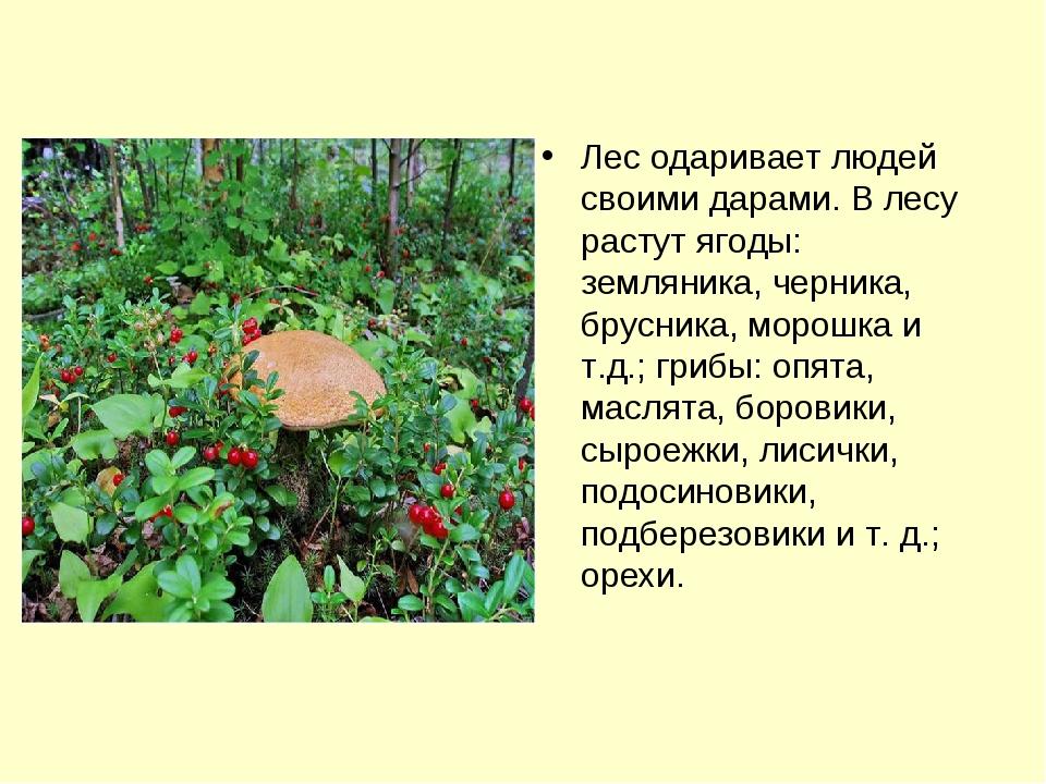 Лес одаривает людей своими дарами. В лесу растут ягоды: земляника, черника, б...