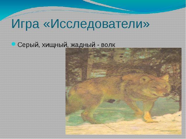 Игра «Исследователи» Серый, хищный, жадный - волк