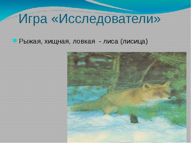 Игра «Исследователи» Рыжая, хищная, ловкая - лиса (лисица)