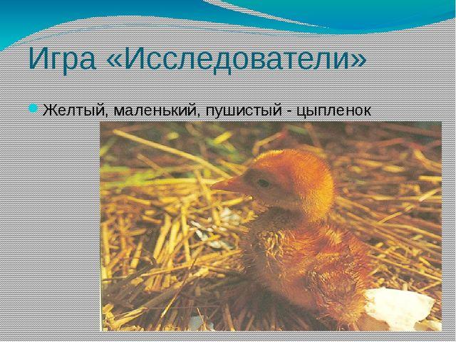 Игра «Исследователи» Желтый, маленький, пушистый - цыпленок