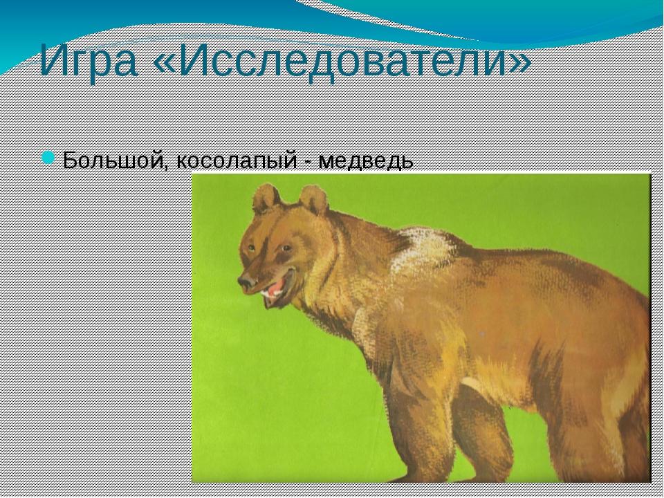 Игра «Исследователи» Большой, косолапый - медведь