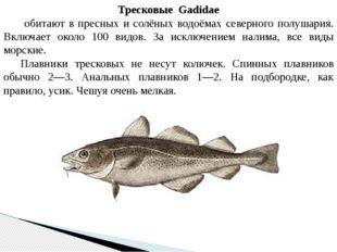 Тресковые Gadidae  обитают в пресных и солёных водоёмах северного полушария.