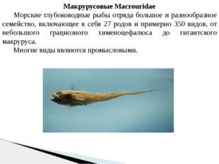 Макрурусовые Macrouridae Морские глубоководные рыбы отряда большое и разнооб