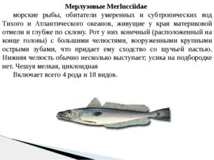 Мерлузовые Merlucciidae морские рыбы, обитатели умеренных и субтропических в
