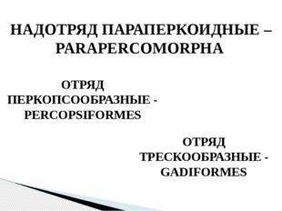 НАДОТРЯД ПАРАПЕРКОИДНЫЕ – PARAPERCOMORPHA ОТРЯД ПЕРКОПСООБРАЗНЫЕ - PERCOPSIFO
