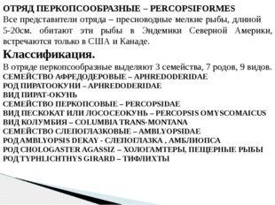 ОТРЯД ПЕРКОПСООБРАЗНЫЕ – PERCOPSIFORMES Все представители отряда – пресноводн
