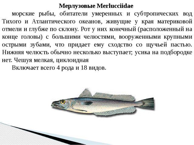 Мерлузовые Merlucciidae морские рыбы, обитатели умеренных и субтропических в...
