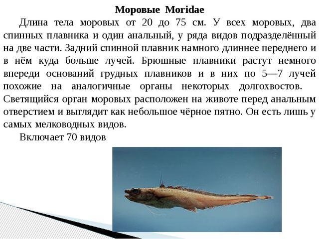 МоровыеMoridae Длина тела моровых от 20 до 75 см. У всех моровых, два спин...