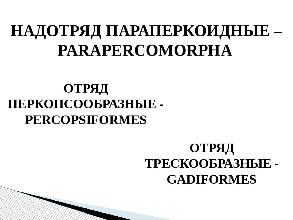 НАДОТРЯД ПАРАПЕРКОИДНЫЕ – PARAPERCOMORPHA ОТРЯД ПЕРКОПСООБРАЗНЫЕ - PERCOPSIFO...
