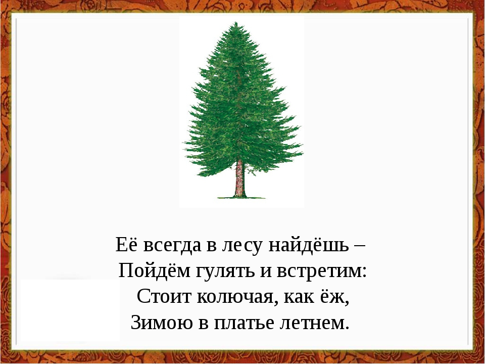Её всегда в лесу найдёшь – Пойдём гулять и встретим: Стоит колючая, как ёж, З...