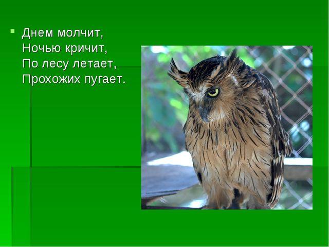 Днем молчит, Ночью кричит, По лесу летает, Прохожих пугает.