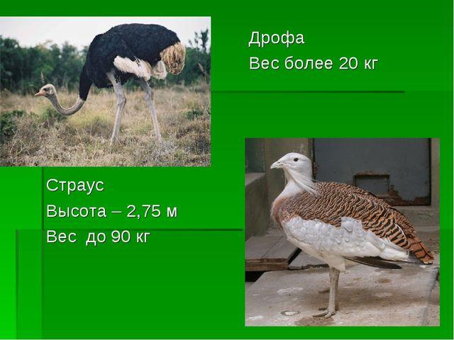 Страус Высота – 2,75 м Вес до 90 кг Дрофа Вес более 20 кг