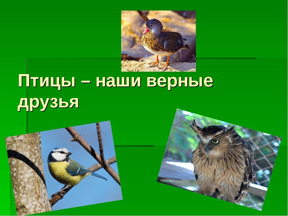 Птицы – наши верные друзья