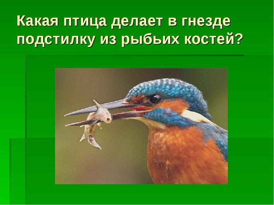 Какая птица делает в гнезде подстилку из рыбьих костей?
