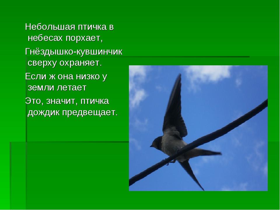 Небольшая птичка в небесах порхает, Гнёздышко-кувшинчик сверху охраняет. Есл...