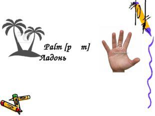 Palm [pɑːm] Ладонь