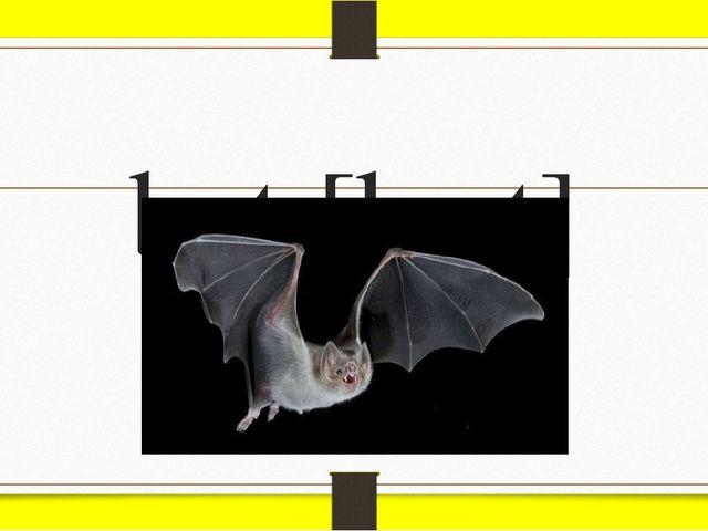 bat [bæt]