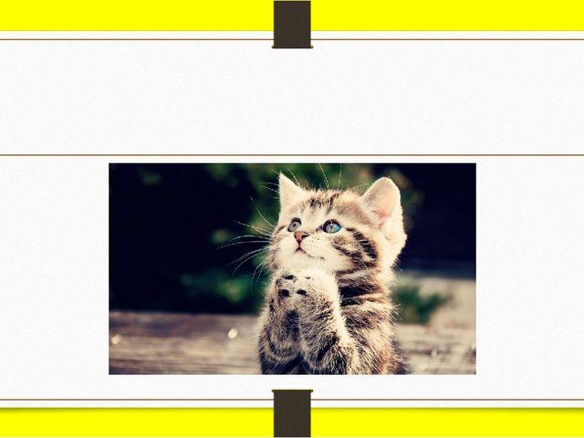 cat [kæt]