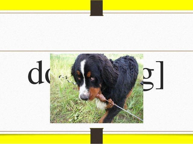 dog [dɒg]