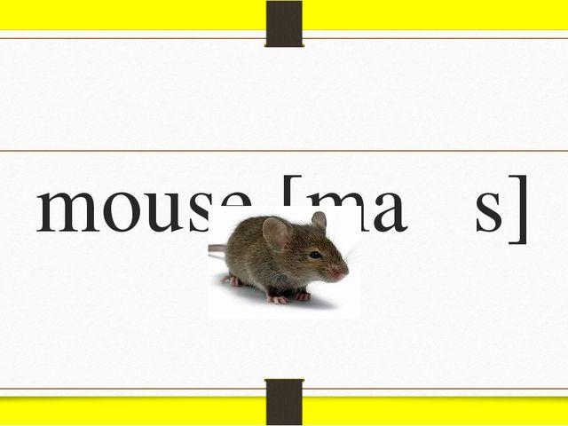 mouse [maƱs]