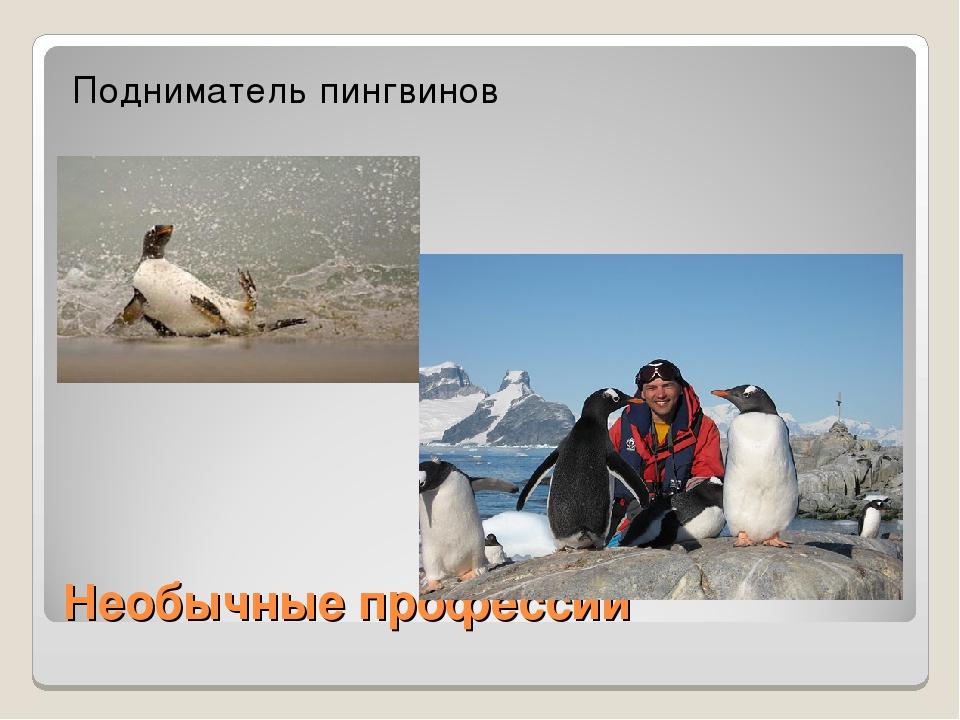 Необычные профессии Подниматель пингвинов
