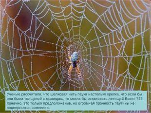 Ученые рассчитали, что шелковая нить паука настолько крепка, что если бы она