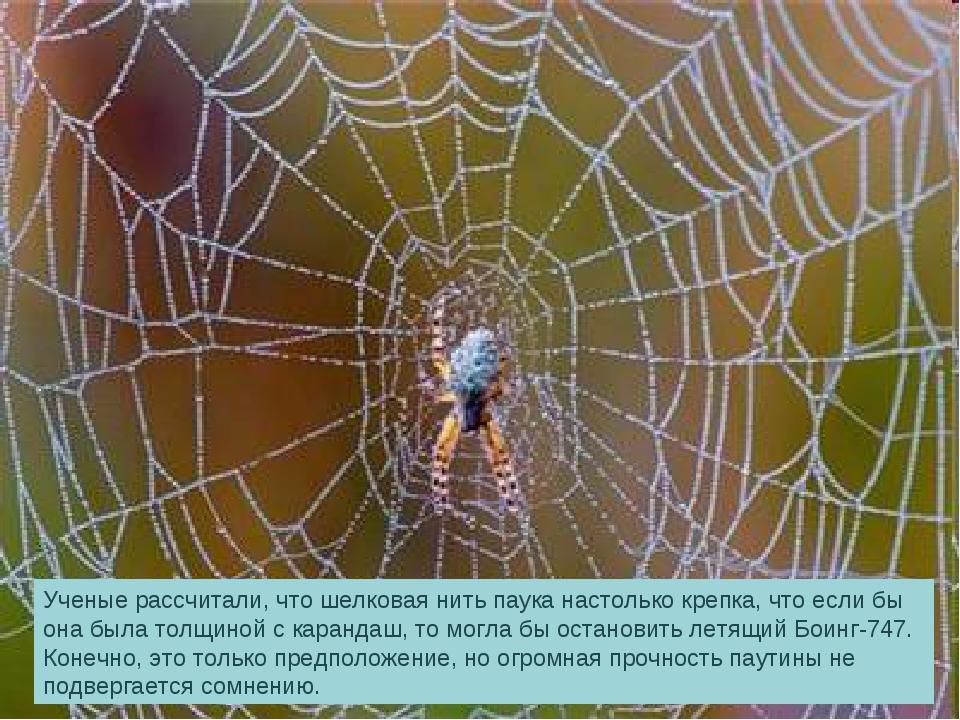 Ученые рассчитали, что шелковая нить паука настолько крепка, что если бы она...