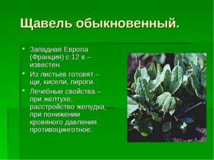 Щавель обыкновенный. Западная Европа (Франция) с 12 в – известен. Из листьев