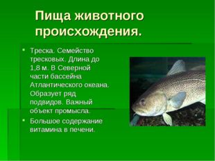 Пища животного происхождения. Треска. Семейство тресковых. Длина до 1,8 м. В