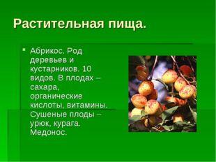 Растительная пища. Абрикос. Род деревьев и кустарников. 10 видов. В плодах –с