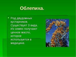 Облепиха. Род двудомных кустарников. Существует 3 вида. Из семян получают це