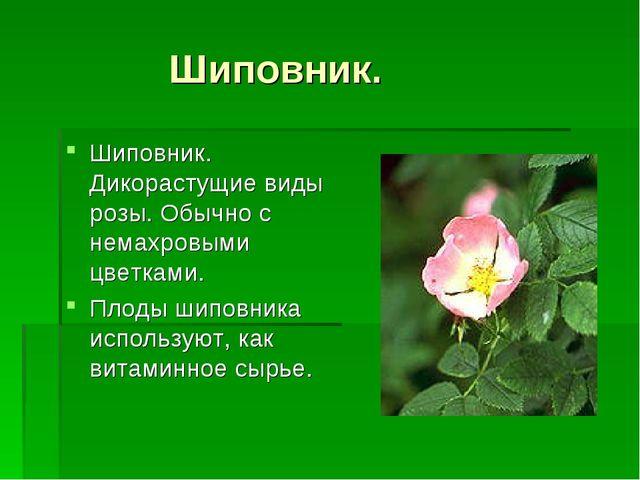 Шиповник. Шиповник. Дикорастущие виды розы. Обычно с немахровыми цветками. П...