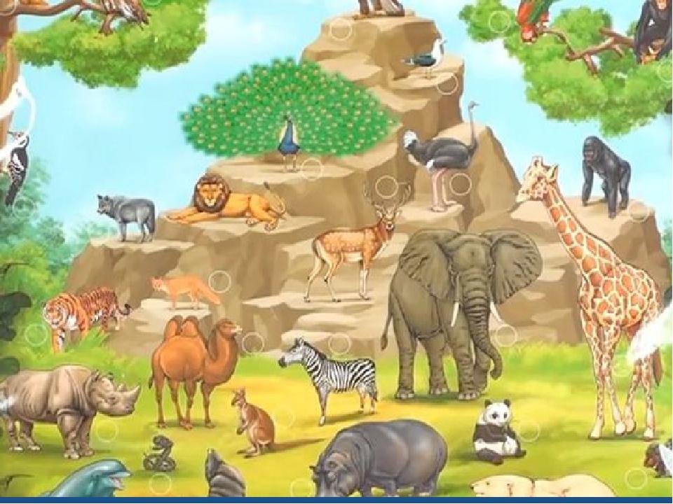 Картинки для детей по теме зоопарк