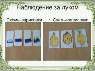 Наблюдение за луком Схемы-зарисовки Схемы-зарисовки