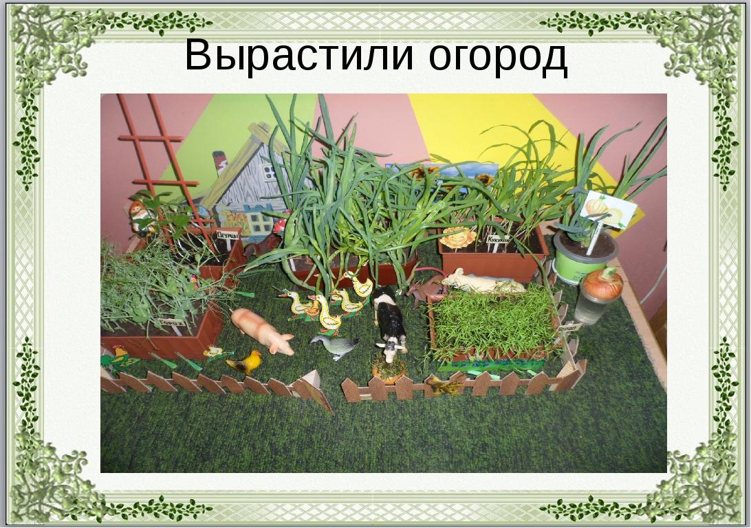 Вырастили огород